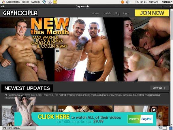Gay Hoopla Password Username