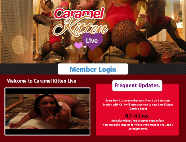 Accounts To Caramel Kitten Live